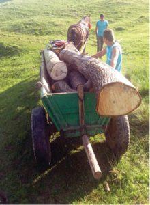 furt lemne2