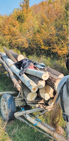 furt lemne 2
